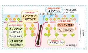 パイナップル豆乳ローションの成分と抑毛効果の説明図